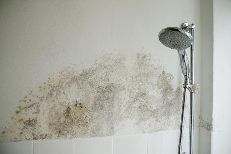 Der Beste Weg Schimmel Im Badezimmer Zu Entfernen