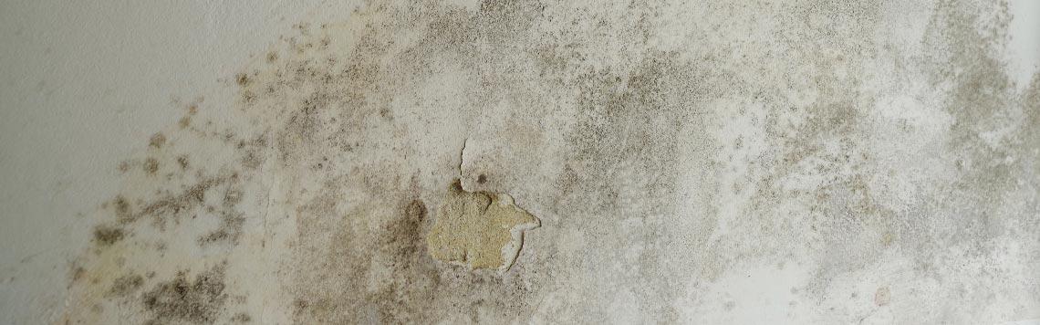 Schimmel an der Wand - unschön und gesundheitlich gefährlich